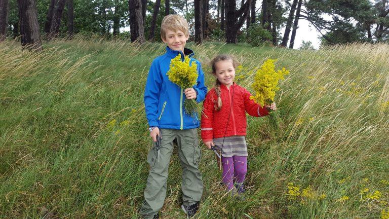børn plukker blomster på mark