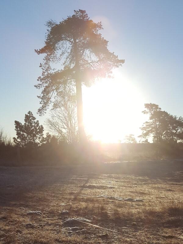 solskinsdag om vinteren