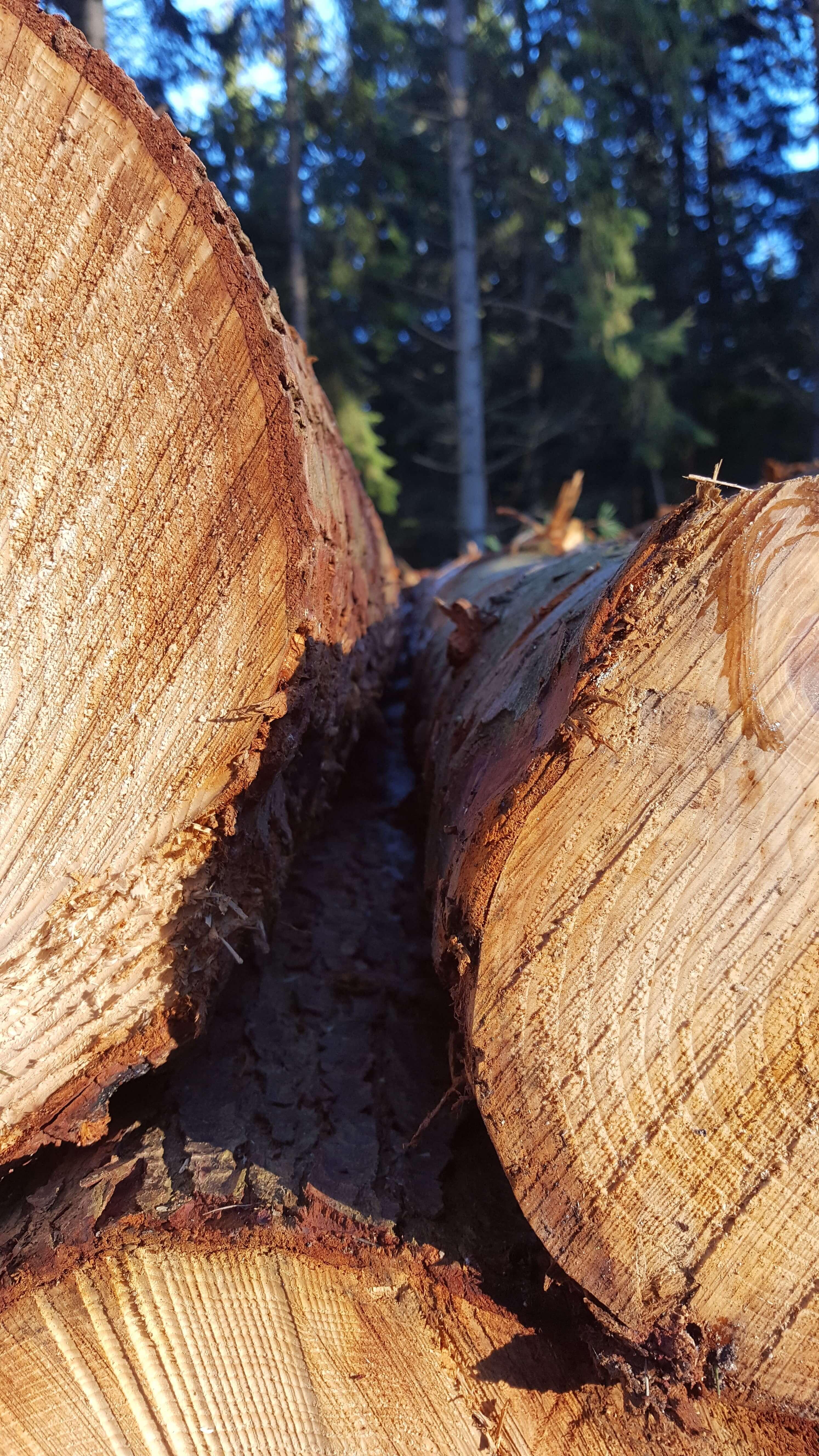 nyfældede træstammer