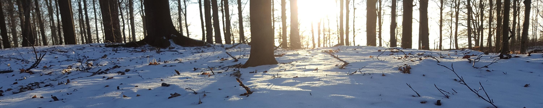 vinter i bøgeskov